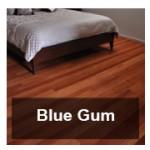 bluegum