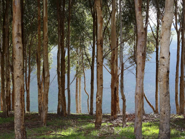Aust-Nat-Forest-Flooring